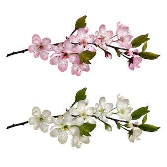Conjunto de ramos de cerejeira em flor