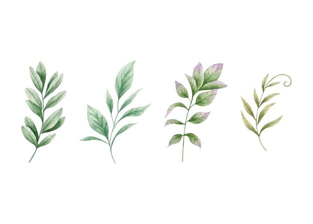 Conjunto de ramos de folhas verdes em aquarela Vetor Premium