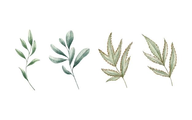 Conjunto de ramos de folhas verdes em aquarela