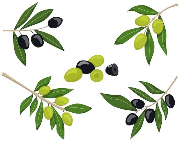 Conjunto de ramos de oliveira. azeitonas pretas e verdes, isoladas no fundo branco.