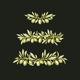 Conjunto de ramos de oliveira borda vintage desenhada à mão vector fruta verde folhas rústicas