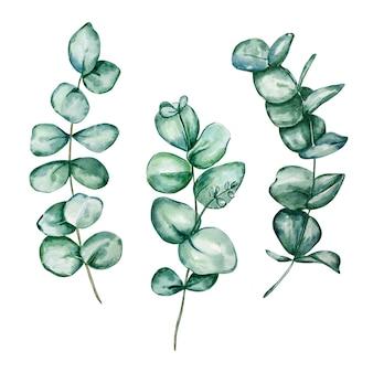 Conjunto de ramos e folhas redondas de eucalipto em aquarela diferentes. itens de eucalipto bebê e dólar de prata pintados à mão. ilustração floral isolada no fundo branco.
