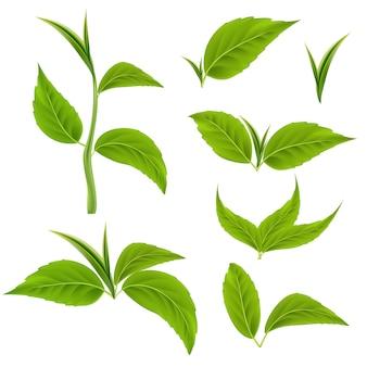 Conjunto de ramos e folhas verdes realistas. troncos de árvore em vetor 3d para produtos biológicos e saudáveis