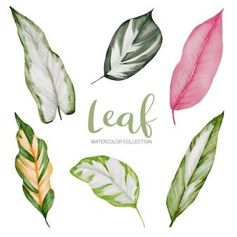 Conjunto de ramos verdes em aquarela com folhas de cores lindas em branco