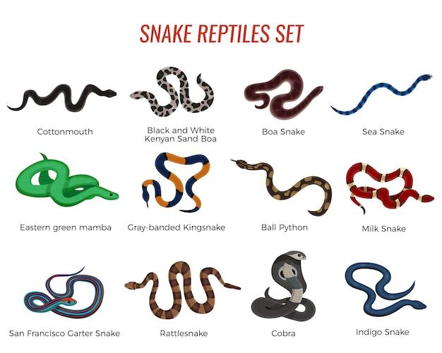 Conjunto de répteis de cobras