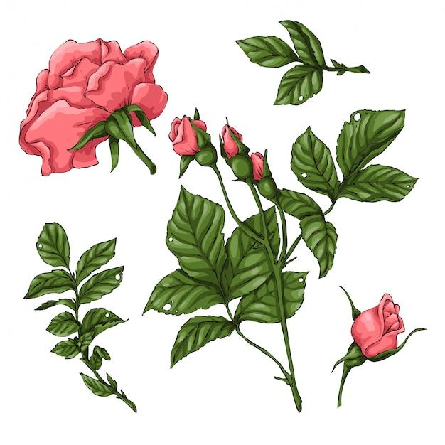 Conjunto de rosas corais.