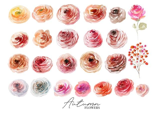 Conjunto de rosas de outono em aquarela pintadas à mão com ilustrações isoladas em um fundo branco