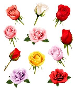 Conjunto de rosas diferentes. vetor.