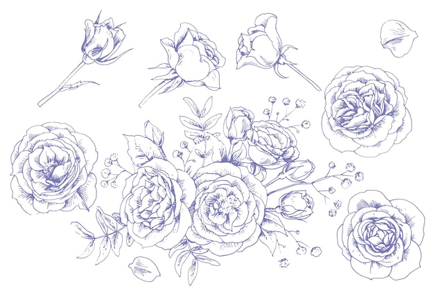 Conjunto de rosas gráficas