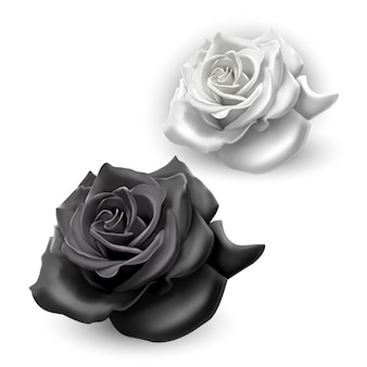Conjunto de rosas pretas e brancas