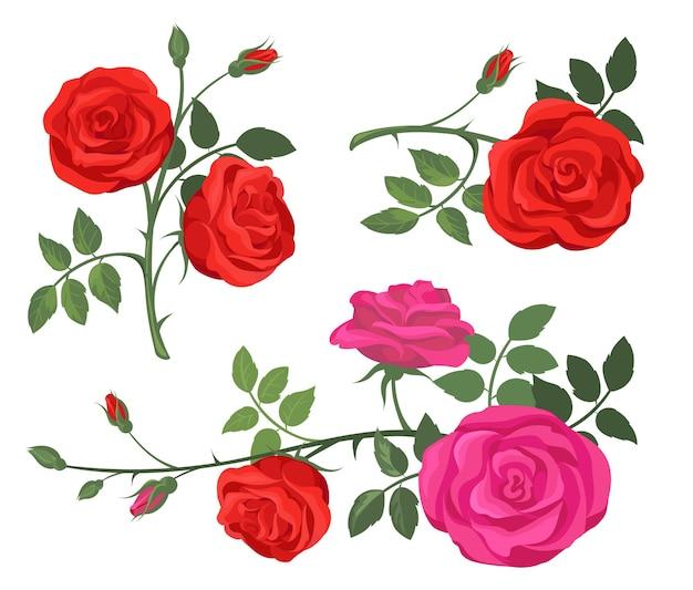 Conjunto de rosas vermelhas e roxas