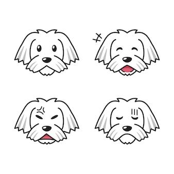 Conjunto de rostos de cachorro maltês, mostrando emoções diferentes.