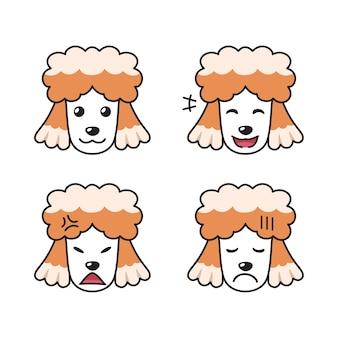 Conjunto de rostos de cachorro poodle mostrando emoções diferentes