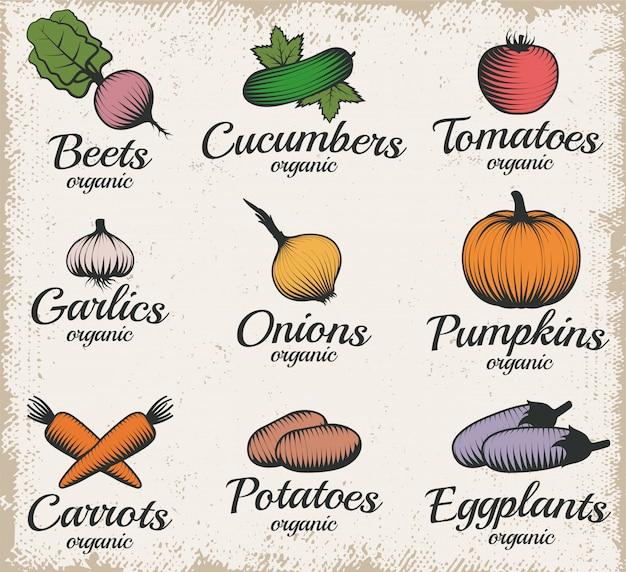 Conjunto de rótulo de legumes de estilo retro