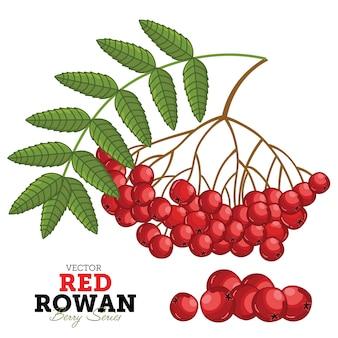 Conjunto de rowan vermelho