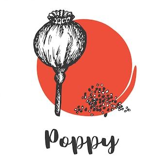 Conjunto de sementes e nozes. mão vintage, desenho, de, semente papoula ilustração vetorial, flor selvagem