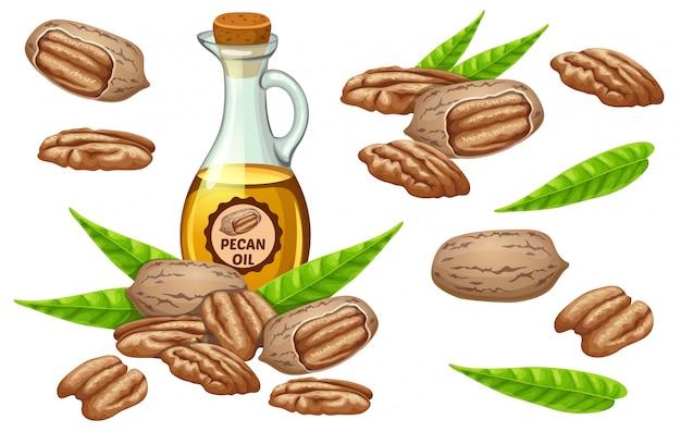 Conjunto de sementes e sementes de óleo de noz-pecã.