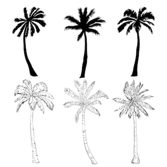 Conjunto de silhueta de árvore de palma