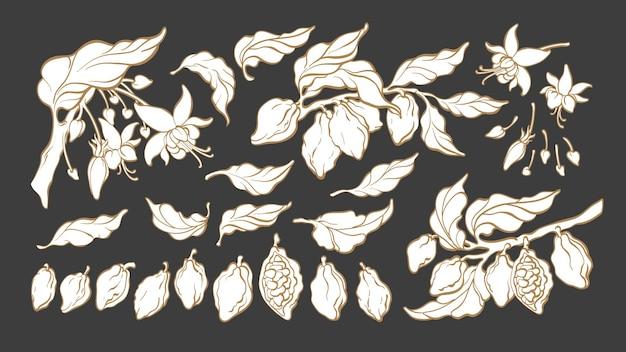 Conjunto de silhueta de cacau desenho botânico de feijão, fruta, folha, flor, grupo, isolado