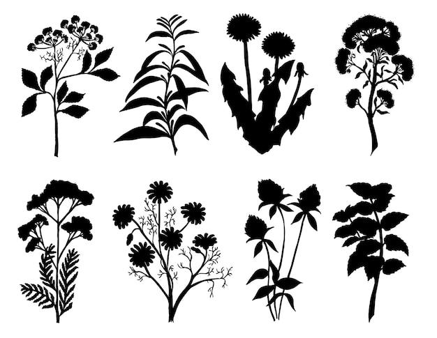 Conjunto de silhueta por ervas e flores esboço desenhado à mão silhuetas de ervas medicinais e chá silhuetas negras de ilustração de ervas selvagens de prado