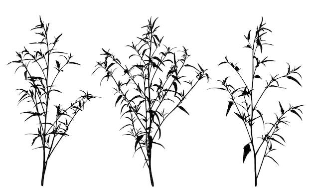 Conjunto de silhuetas de ervas selvagens.