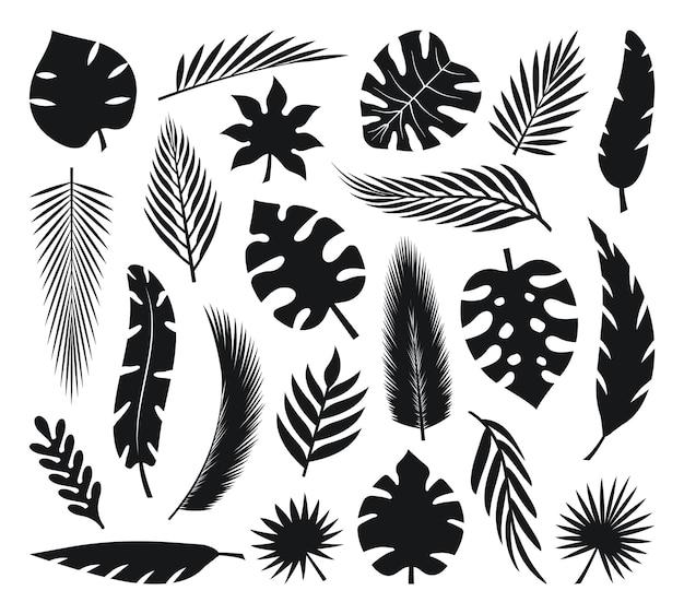 Conjunto de silhuetas de folhas tropicais folhas de palmeira