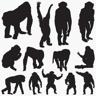 Conjunto de silhuetas de macaco