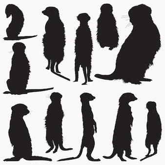 Conjunto de silhuetas de meerkat