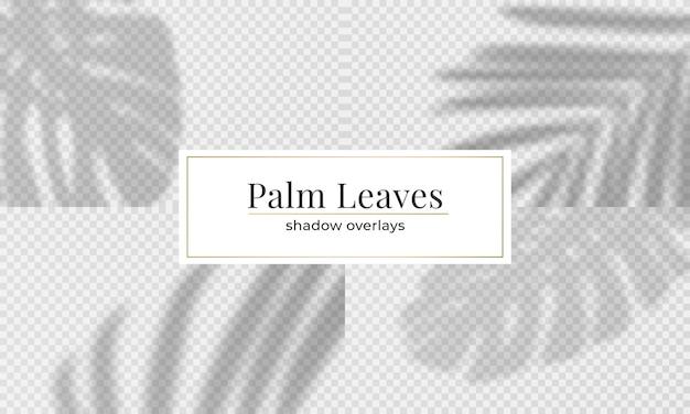 Conjunto de sobreposição de sombra de folhas de palmeira. efeito de sombra transparente