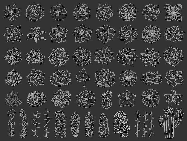 Conjunto de suculentas e cactos ilustração de flores do deserto desenhada à mão em estilo doodle aloe e cacto Vetor Premium
