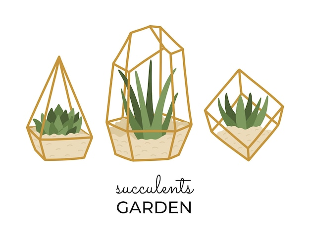 Conjunto de suculentas em terrários dourados, diferentes plantas caseiras desenhadas à mão na moda em estilo simples