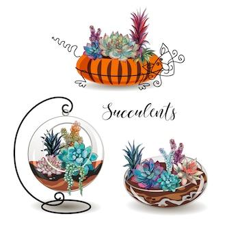 Conjunto de suculentas em vasos decorativos