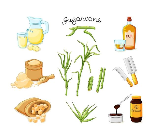 Conjunto de talos e folhas de cana-de-açúcar. suco de cana espremido na hora em uma jarra e copo, cubos, garrafas de vidro de rum, bambu, melaço. ilustração vetorial em um fundo branco isolado
