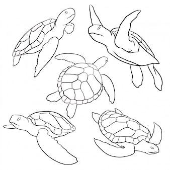 Conjunto de tartaruga desenhada de mão