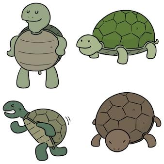 Conjunto de tartarugas bonitinha