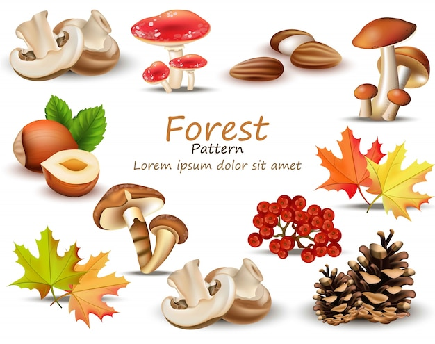 Conjunto de tema florestal com cogumelos, nozes, folhas, pinecone