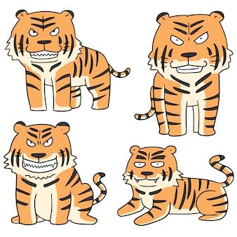 Conjunto de tigre