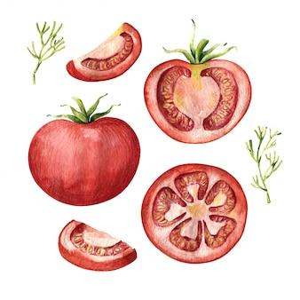Conjunto de tomate, inteiro, metade e fatiado, vista superior e lateral