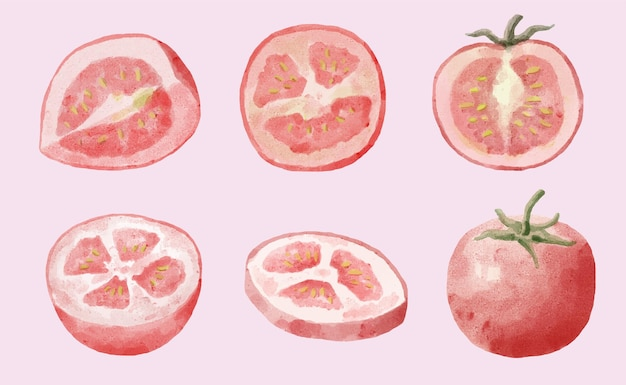 Conjunto de tomates aquarela