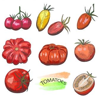 Conjunto de tomates coloridos mão desenhada isolado no fundo branco.
