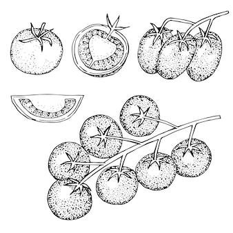 Conjunto de tomates com folhas, em um galho, metade e uma fatia, ilustração vetorial, esboço de desenho à mão