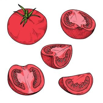 Conjunto de tomates diferentes isolados. esboço de cor.