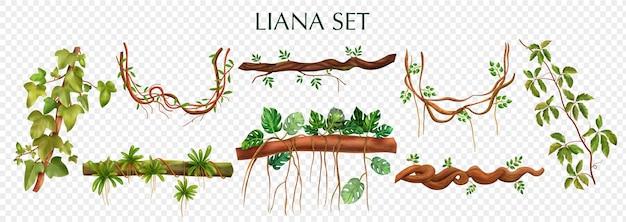 Conjunto de trepadeiras de lianas tropicais com elementos de videiras decorativas de planta trepadeira monstera