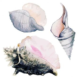 Conjunto de três conchas do mar em aquarela