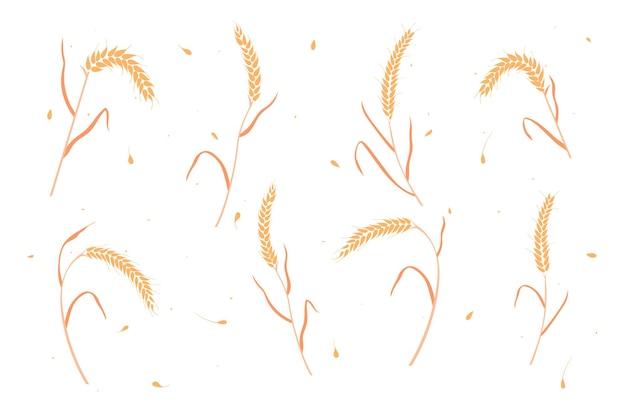 Conjunto de trigo seco ou espigas de centeio estilo plano design ilustração vetorial