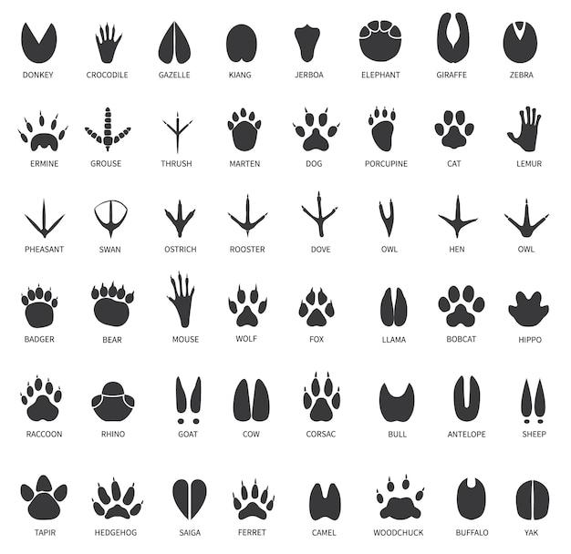Conjunto de trilhas de animais
