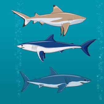 Conjunto de tubarões comuns ilustração vetorial