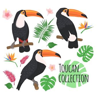 Conjunto de tucanos com elementos tropicais isolados no estilo desenhado de fundo branco na mão.