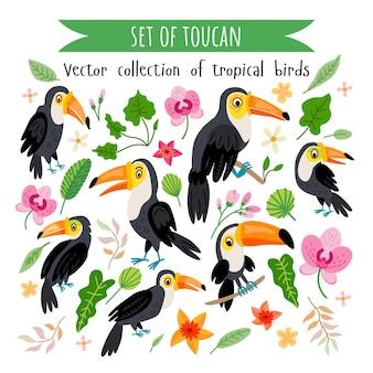Conjunto de tucanos isolado no branco