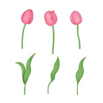 Conjunto de tulipas de aquarela mão desenhada.